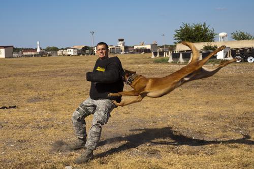 Σκύλος της πολεμικής αεροπορίας σε εκπαίδευση, Σαν Αντόνιο, Τέξας / Air Force Working Dog in Training, San Antonio, Texas