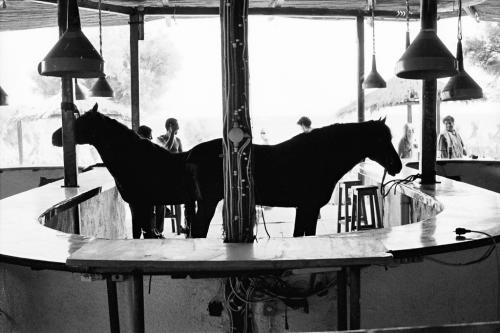 Μπαρ με άλογα / Bar with horses