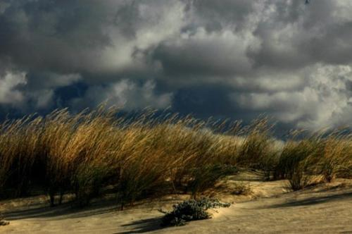 Παρά θιν Αλός / Dunes by the Seaside
