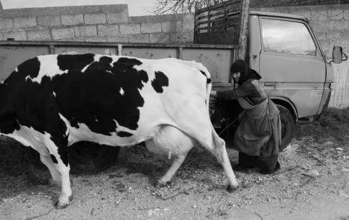 Ιερή αγελάδα / Holy cow