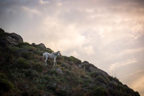 Πήγασος / Pegasus