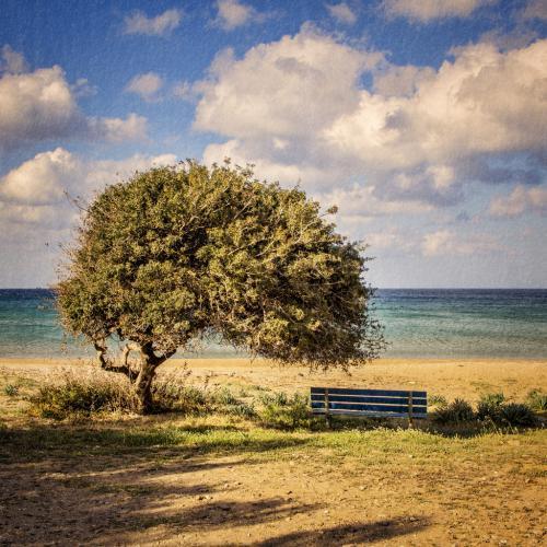 Δέντρο / Tree