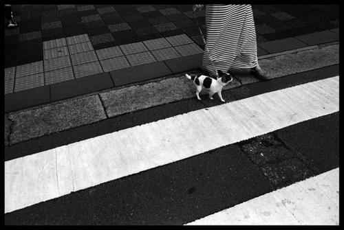 Παράλληλα / White stripes and patterns (Japan)